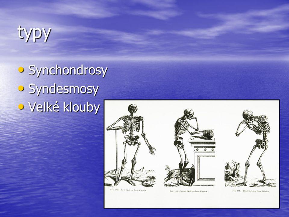 typy Synchondrosy Synchondrosy Syndesmosy Syndesmosy Velké klouby Velké klouby