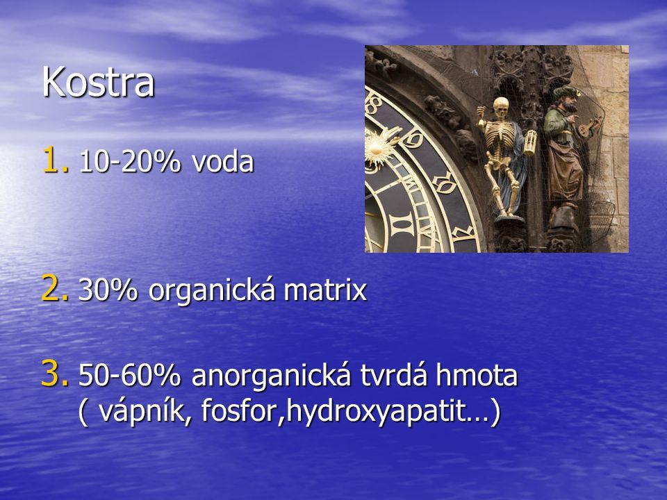 Kostra 1.10-20% voda 2. 30% organická matrix 3.