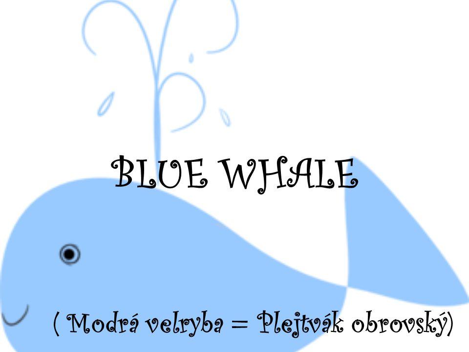 Modrá velryba – poslech, práce s textem.