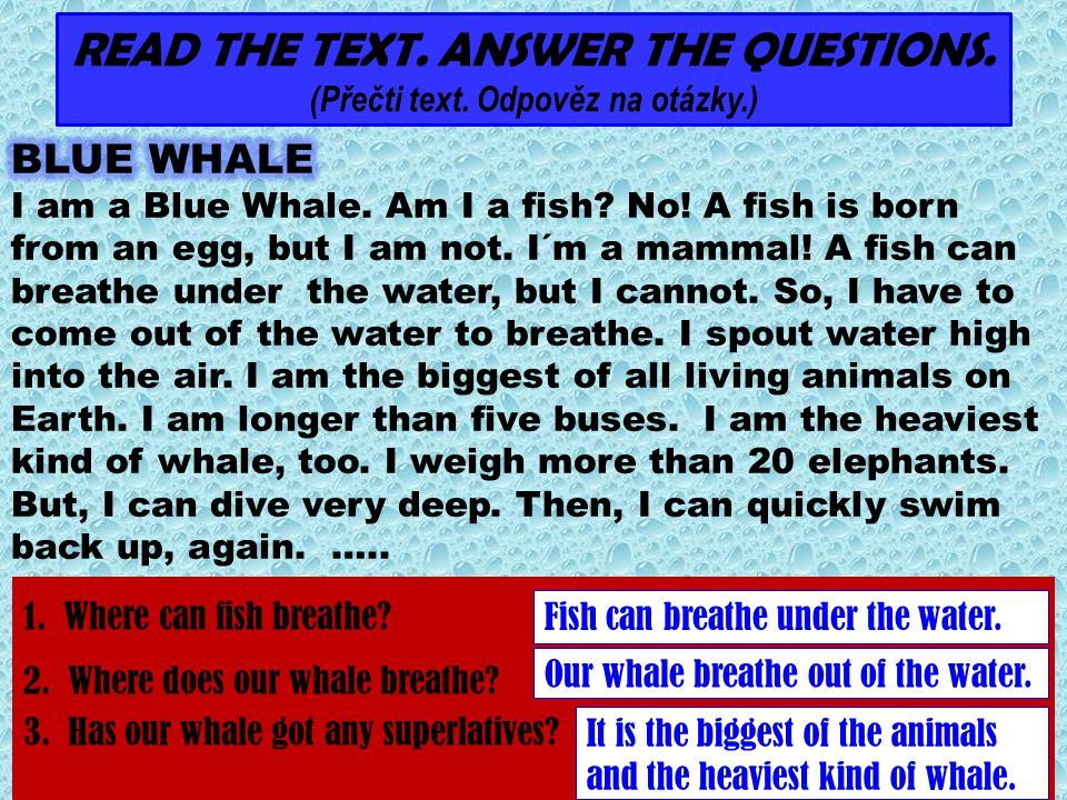 1.Where can fish breathe.2. Where does our whale breathe.