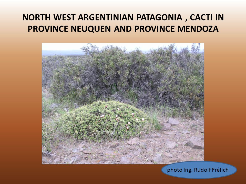 NORTH WEST ARGENTINIAN PATAGONIA, CACTI IN PROVINCE NEUQUEN AND PROVINCE MENDOZA photo Ing. Rudolf Frélich