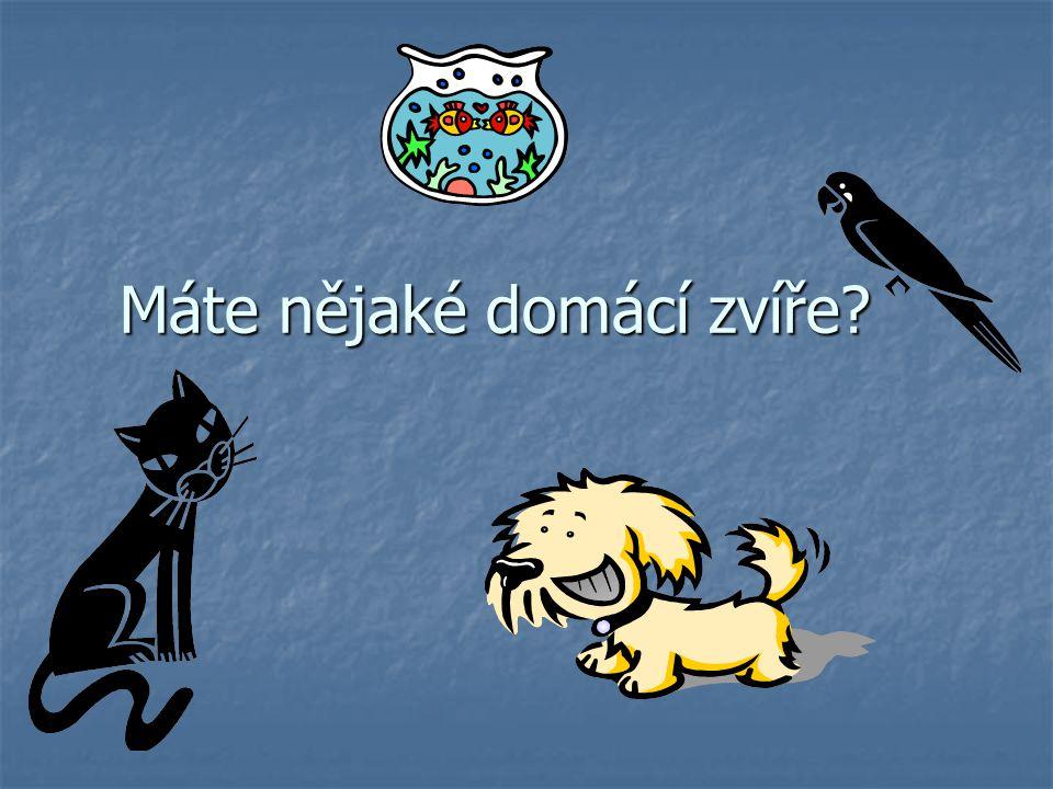 Máte nějaké domácí zvíře?