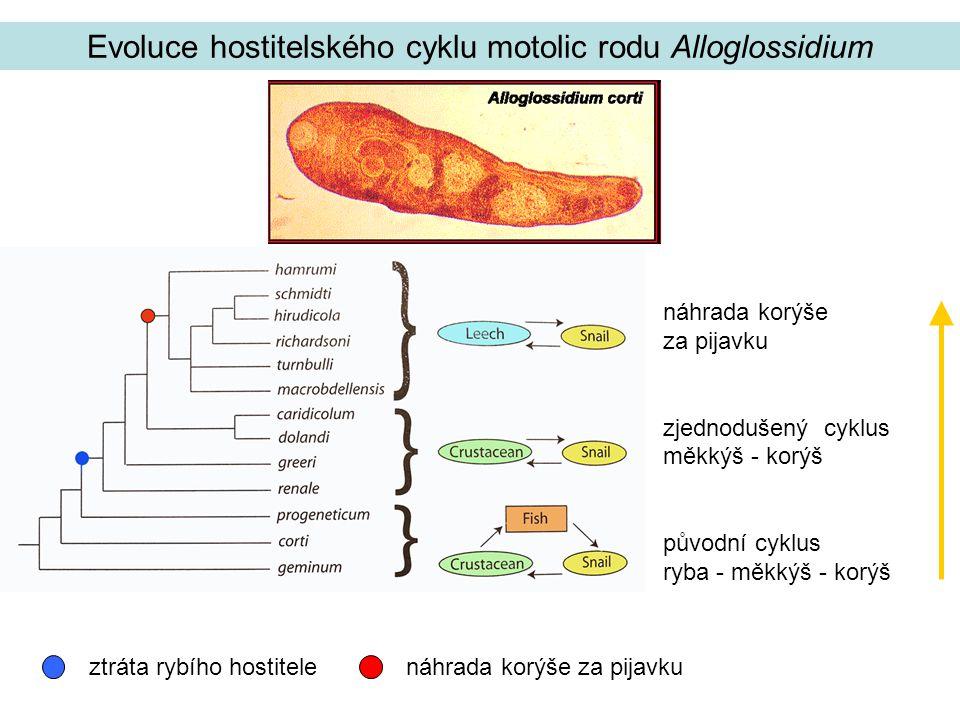 Evoluce hostitelského cyklu motolic rodu Alloglossidium náhrada korýše za pijavku zjednodušený cyklus měkkýš - korýš původní cyklus ryba - měkkýš - korýš ztráta rybího hostitelenáhrada korýše za pijavku