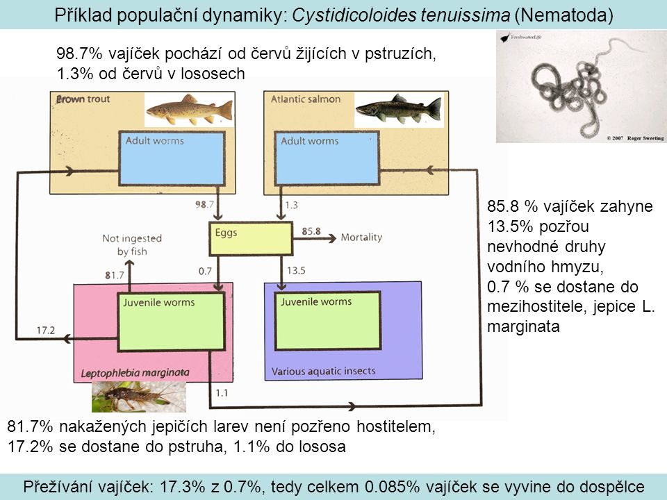 Příklad populační dynamiky: Cystidicoloides tenuissima (Nematoda) 98.7% vajíček pochází od červů žijících v pstruzích, 1.3% od červů v lososech 85.8 % vajíček zahyne 13.5% pozřou nevhodné druhy vodního hmyzu, 0.7 % se dostane do mezihostitele, jepice L.