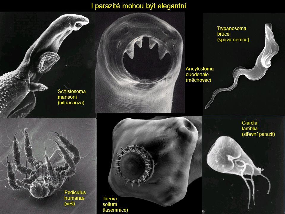 Co je na parazitech fascinující.
