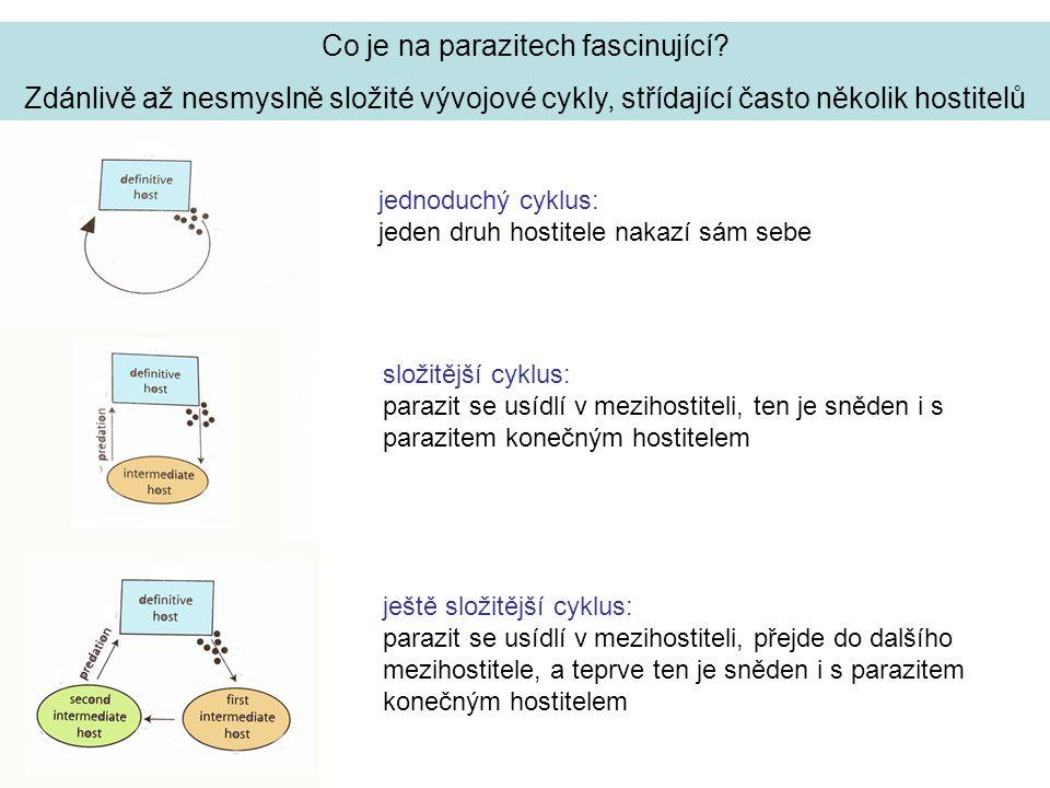 Mezidruhová kompetice parazitů sdílejících téhož hostitele rozmístění tasemnice Hymenolepis a vrtejše Moniliformis ve střevě krysy nákaza jednoho druhu ukazuje druhové preference, změny při společné nákaze jsou výsledkem kompetice Hymenolepis preferuje přední část střeva, ale Moniliformis ji vytlačí do zadní části