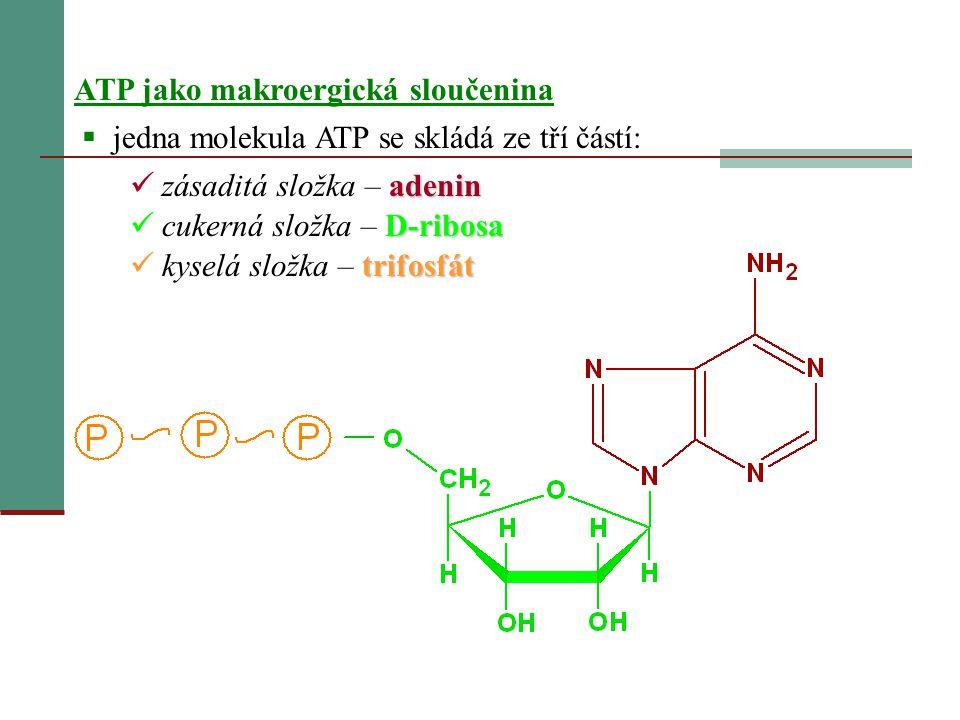 ATP jako makroergická sloučenina  jedna molekula ATP se skládá ze tří částí: adenin  zásaditá složka – adenin D-ribosa  cukerná složka – D-ribosa t