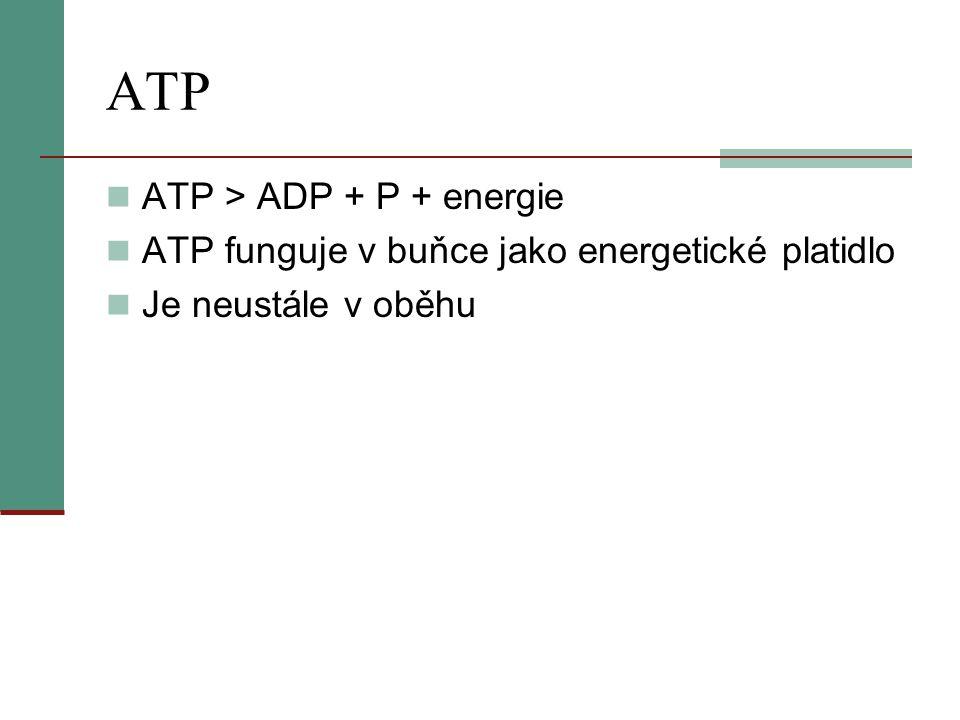 ATP  ATP > ADP + P + energie  ATP funguje v buňce jako energetické platidlo  Je neustále v oběhu