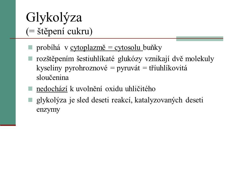 Glykolýza (= štěpení cukru)  probíhá v cytoplazmě = cytosolu buňky  rozštěpením šestiuhlíkaté glukózy vznikají dvě molekuly kyseliny pyrohroznové =