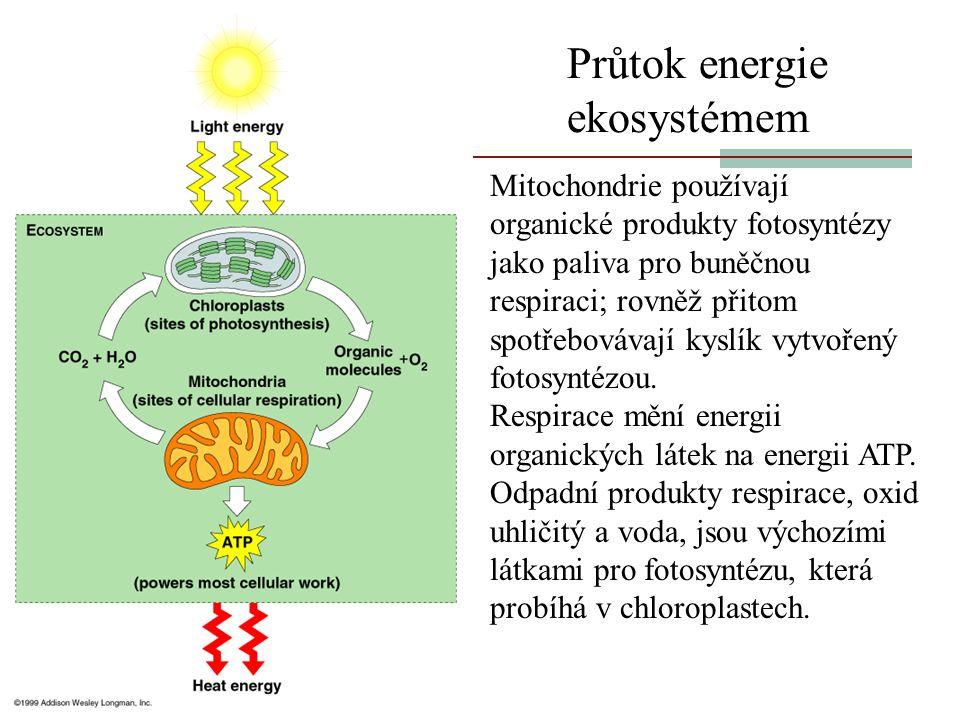 Průtok energie ekosystémem Mitochondrie používají organické produkty fotosyntézy jako paliva pro buněčnou respiraci; rovněž přitom spotřebovávají kysl