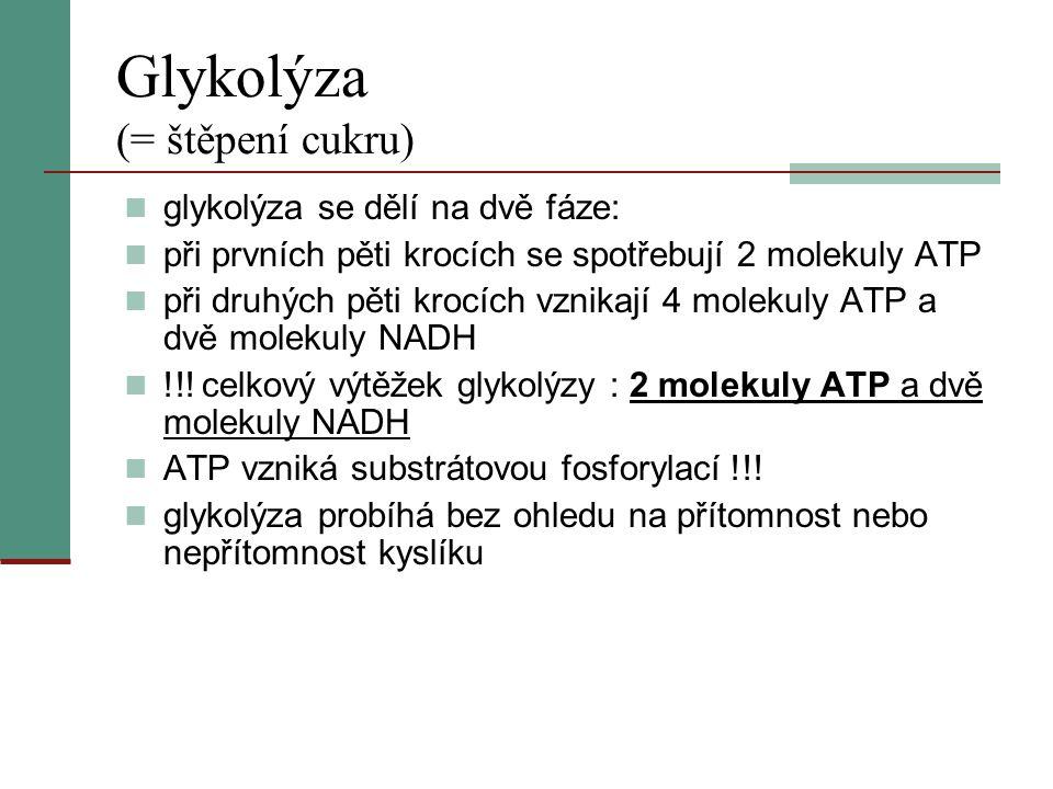 Glykolýza (= štěpení cukru)  glykolýza se dělí na dvě fáze:  při prvních pěti krocích se spotřebují 2 molekuly ATP  při druhých pěti krocích vznika