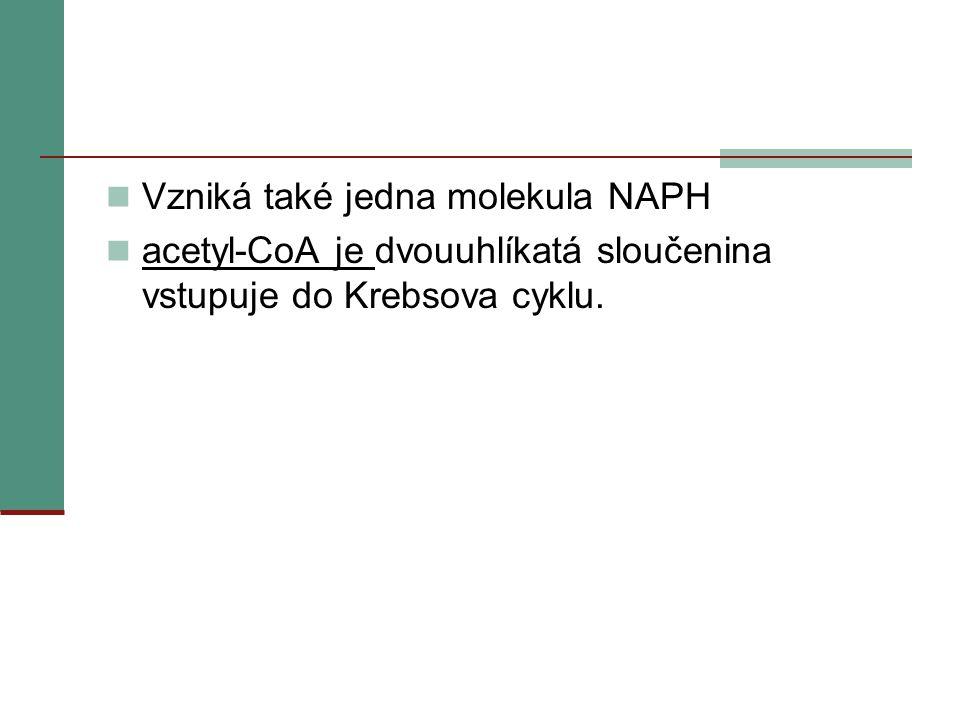  Vzniká také jedna molekula NAPH  acetyl-CoA je dvouuhlíkatá sloučenina vstupuje do Krebsova cyklu.