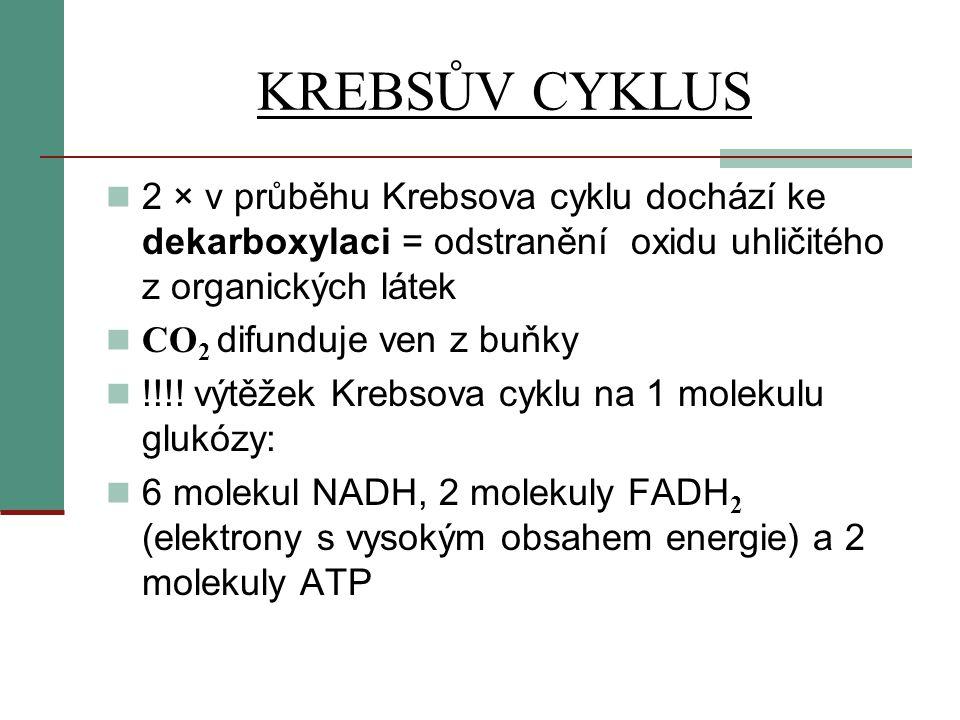 KREBSŮV CYKLUS  2 × v průběhu Krebsova cyklu dochází ke dekarboxylaci = odstranění oxidu uhličitého z organických látek  CO 2 difunduje ven z buňky