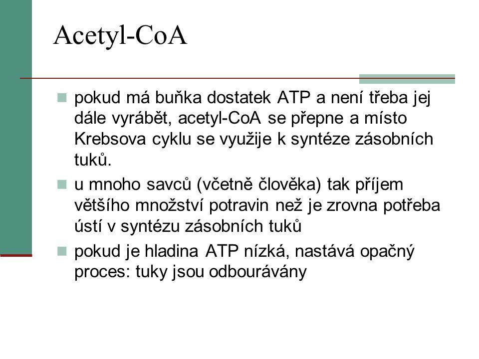 Acetyl-CoA  pokud má buňka dostatek ATP a není třeba jej dále vyrábět, acetyl-CoA se přepne a místo Krebsova cyklu se využije k syntéze zásobních tuk