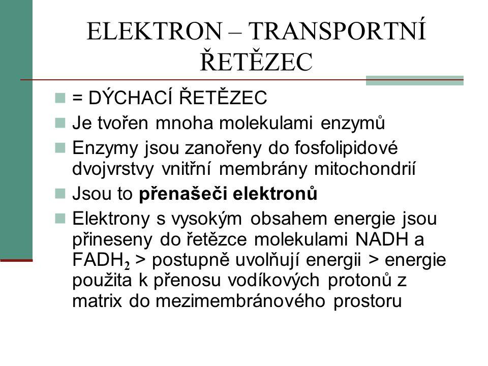 ELEKTRON – TRANSPORTNÍ ŘETĚZEC  = DÝCHACÍ ŘETĚZEC  Je tvořen mnoha molekulami enzymů  Enzymy jsou zanořeny do fosfolipidové dvojvrstvy vnitřní memb