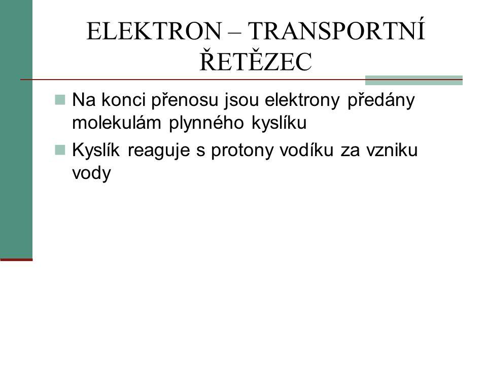 ELEKTRON – TRANSPORTNÍ ŘETĚZEC  Na konci přenosu jsou elektrony předány molekulám plynného kyslíku  Kyslík reaguje s protony vodíku za vzniku vody