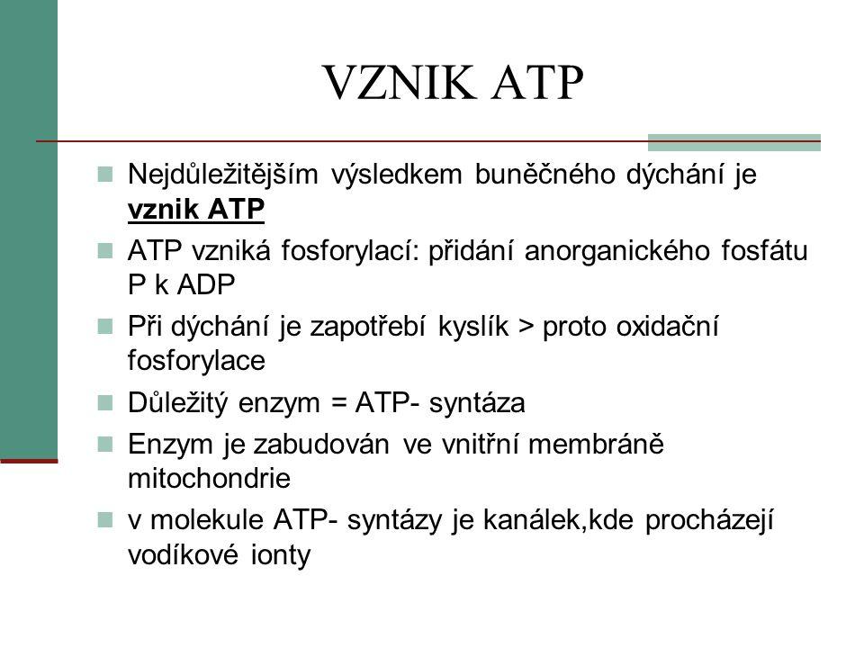 VZNIK ATP  Nejdůležitějším výsledkem buněčného dýchání je vznik ATP  ATP vzniká fosforylací: přidání anorganického fosfátu P k ADP  Při dýchání je