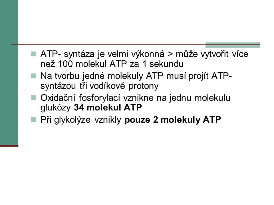  ATP- syntáza je velmi výkonná > může vytvořit více než 100 molekul ATP za 1 sekundu  Na tvorbu jedné molekuly ATP musí projít ATP- syntázou tři vod
