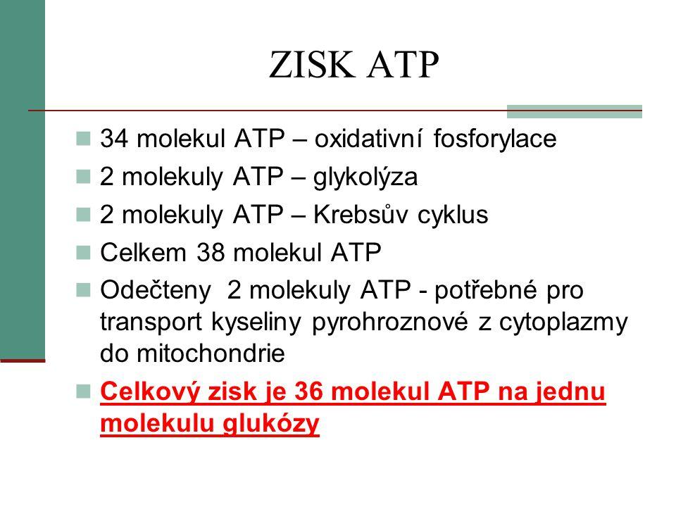 ZISK ATP  34 molekul ATP – oxidativní fosforylace  2 molekuly ATP – glykolýza  2 molekuly ATP – Krebsův cyklus  Celkem 38 molekul ATP  Odečteny 2