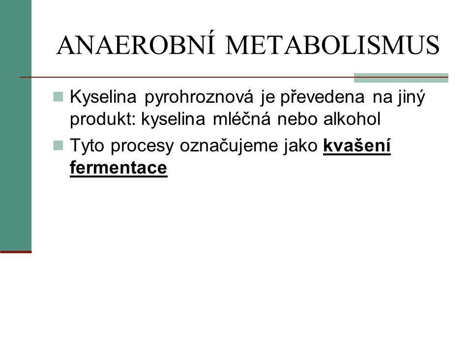 ANAEROBNÍ METABOLISMUS  Kyselina pyrohroznová je převedena na jiný produkt: kyselina mléčná nebo alkohol  Tyto procesy označujeme jako kvašení ferme