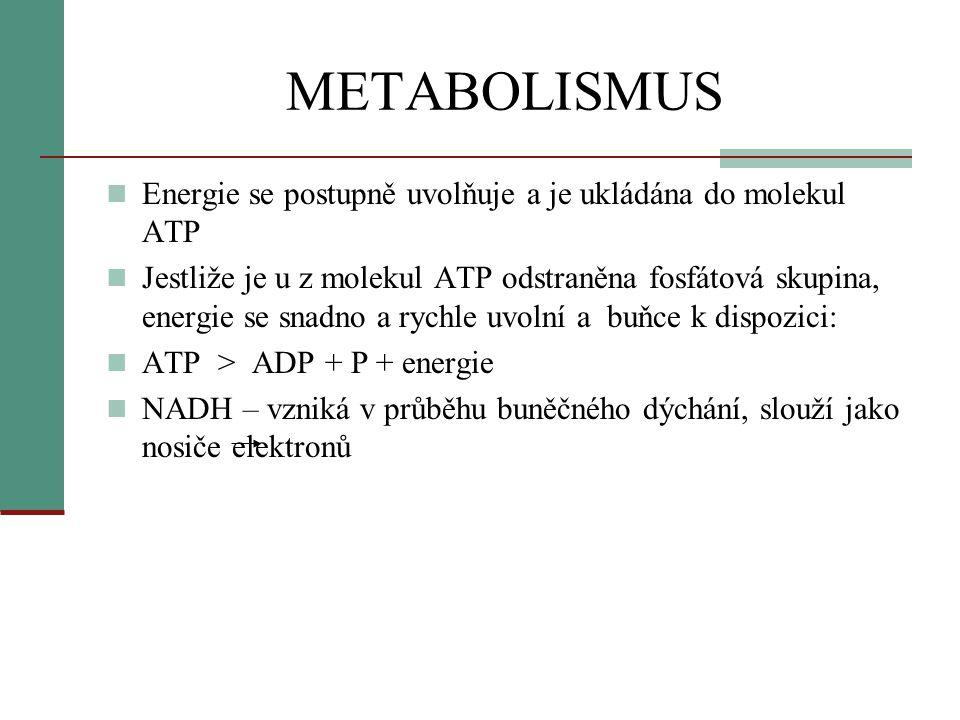METABOLISMUS  Energie se postupně uvolňuje a je ukládána do molekul ATP  Jestliže je u z molekul ATP odstraněna fosfátová skupina, energie se snadno