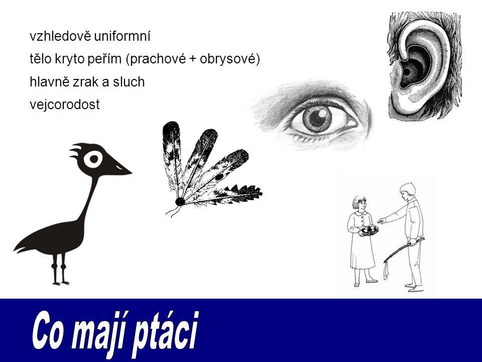vejcorodost vzhledově uniformní tělo kryto peřím (prachové + obrysové) hlavně zrak a sluch