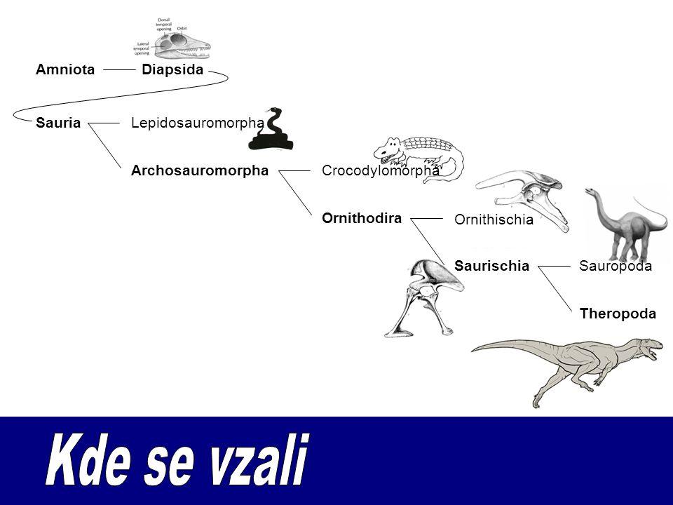 SauriaLepidosauromorpha ArchosauromorphaCrocodylomorpha Ornithodira Ornithischia SaurischiaSauropoda Theropoda DiapsidaAmniota