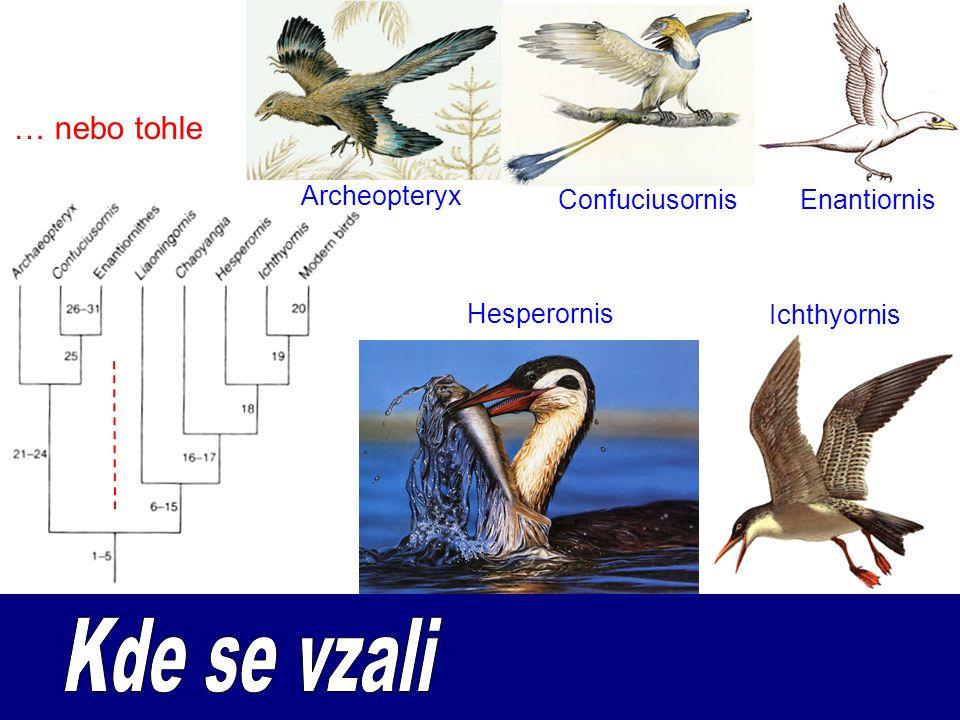 … nebo tohle Archeopteryx ConfuciusornisEnantiornis Hesperornis Ichthyornis