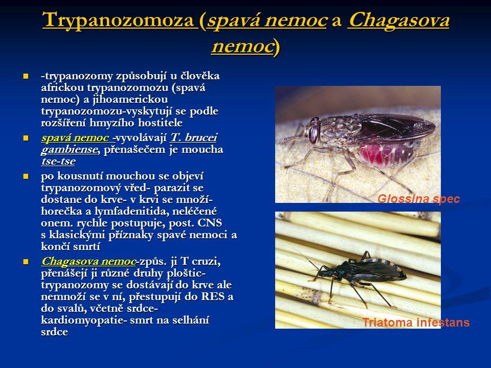 Trypanozomoza (spavá nemoc a Chagasova nemoc)  -trypanozomy způsobují u člověka africkou trypanozomozu (spavá nemoc) a jihoamerickou trypanozomozu-vyskytují se podle rozšíření hmyzího hostitele  spavá nemoc -vyvolávají T.