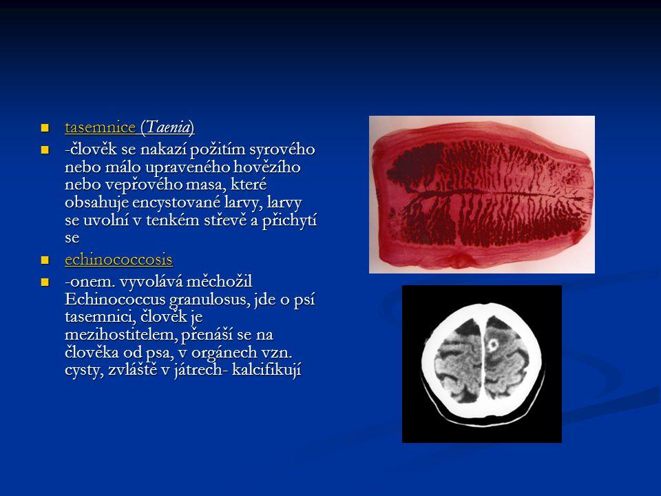  tasemnice (Taenia)  -člověk se nakazí požitím syrového nebo málo upraveného hovězího nebo vepřového masa, které obsahuje encystované larvy, larvy se uvolní v tenkém střevě a přichytí se  echinococcosis  -onem.