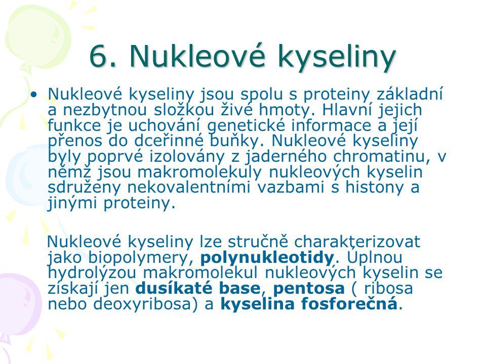 6. Nukleové kyseliny •Nukleové kyseliny jsou spolu s proteiny základní a nezbytnou složkou živé hmoty. Hlavní jejich funkce je uchování genetické info