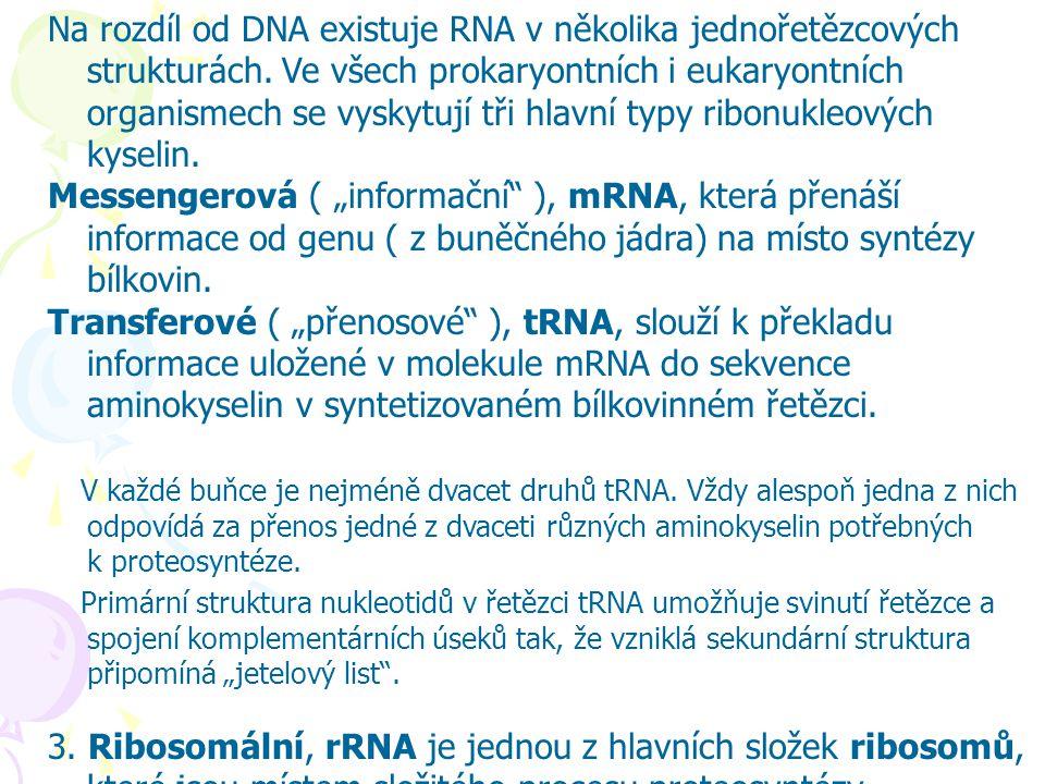Na rozdíl od DNA existuje RNA v několika jednořetězcových strukturách. Ve všech prokaryontních i eukaryontních organismech se vyskytují tři hlavní typ