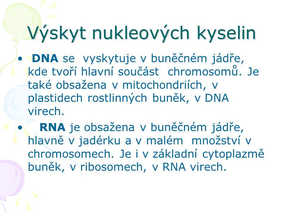 Výskyt nukleových kyselin • DNA se vyskytuje v buněčném jádře, kde tvoří hlavní součást chromosomů. Je také obsažena v mitochondriích, v plastidech ro
