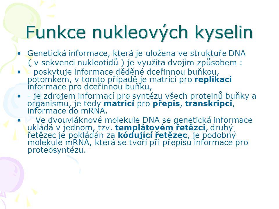 Funkce nukleových kyselin •Genetická informace, která je uložena ve struktuře DNA ( v sekvenci nukleotidů ) je využita dvojím způsobem : •- poskytuje