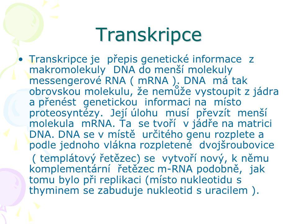 Transkripce •Transkripce je přepis genetické informace z makromolekuly DNA do menší molekuly messengerové RNA ( mRNA ). DNA má tak obrovskou molekulu,