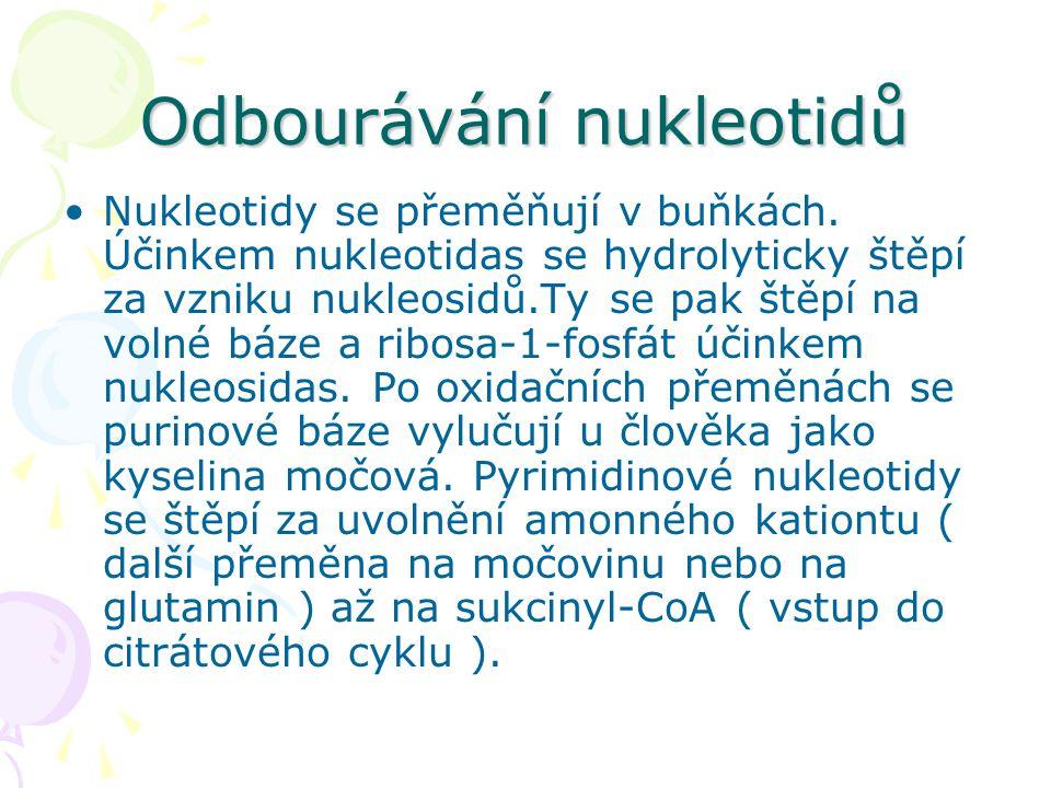 Odbourávání nukleotidů •Nukleotidy se přeměňují v buňkách. Účinkem nukleotidas se hydrolyticky štěpí za vzniku nukleosidů.Ty se pak štěpí na volné báz