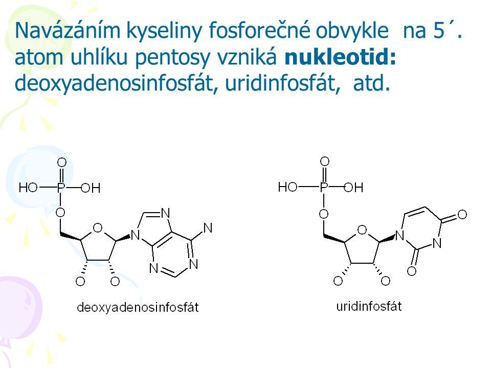 Navázáním kyseliny fosforečné obvykle na 5´. atom uhlíku pentosy vzniká nukleotid: deoxyadenosinfosfát, uridinfosfát, atd.