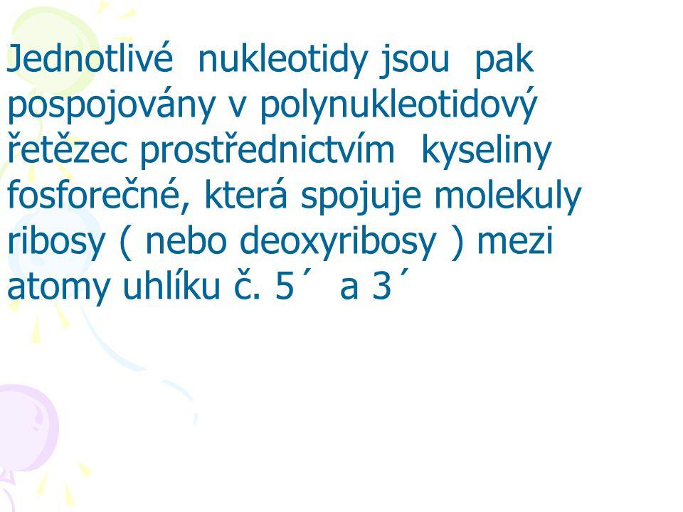 Jednotlivé nukleotidy jsou pak pospojovány v polynukleotidový řetězec prostřednictvím kyseliny fosforečné, která spojuje molekuly ribosy ( nebo deoxyr