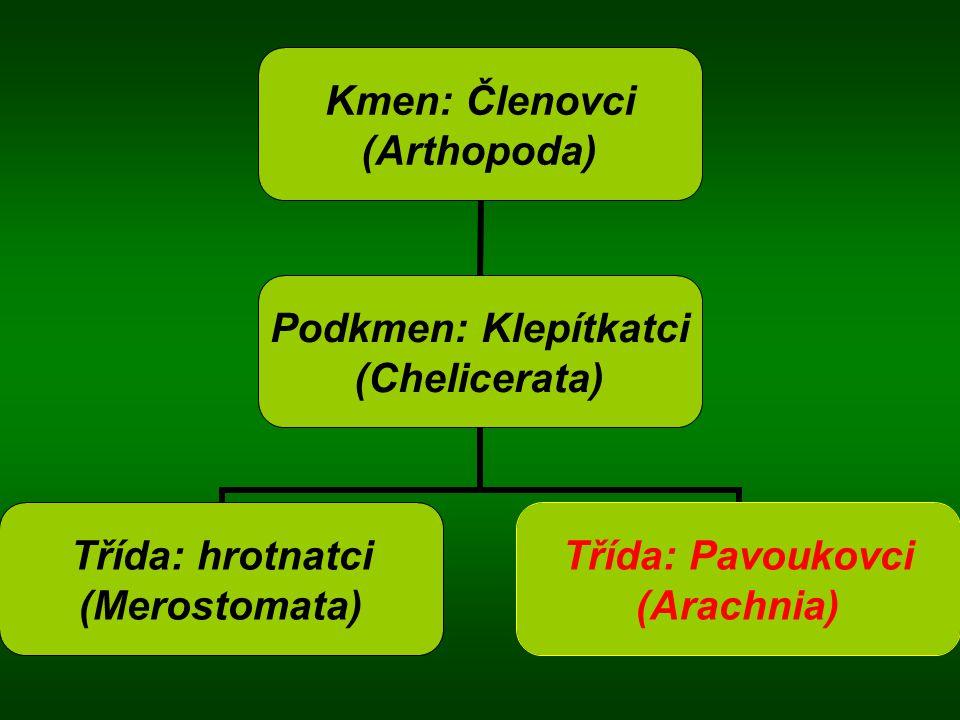 Kmen: Členovci (Arthopoda) Podkmen: Klepítkatci (Chelicerata) Třída: hrotnatci (Merostomata) Třída: Pavoukovci (Arachnia)