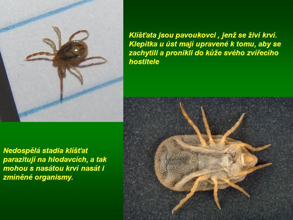 Klíšťata jsou pavoukovci, jenž se živí krví. Klepítka u úst mají upravené k tomu, aby se zachytili a pronikli do kůže svého zvířecího hostitele Nedosp