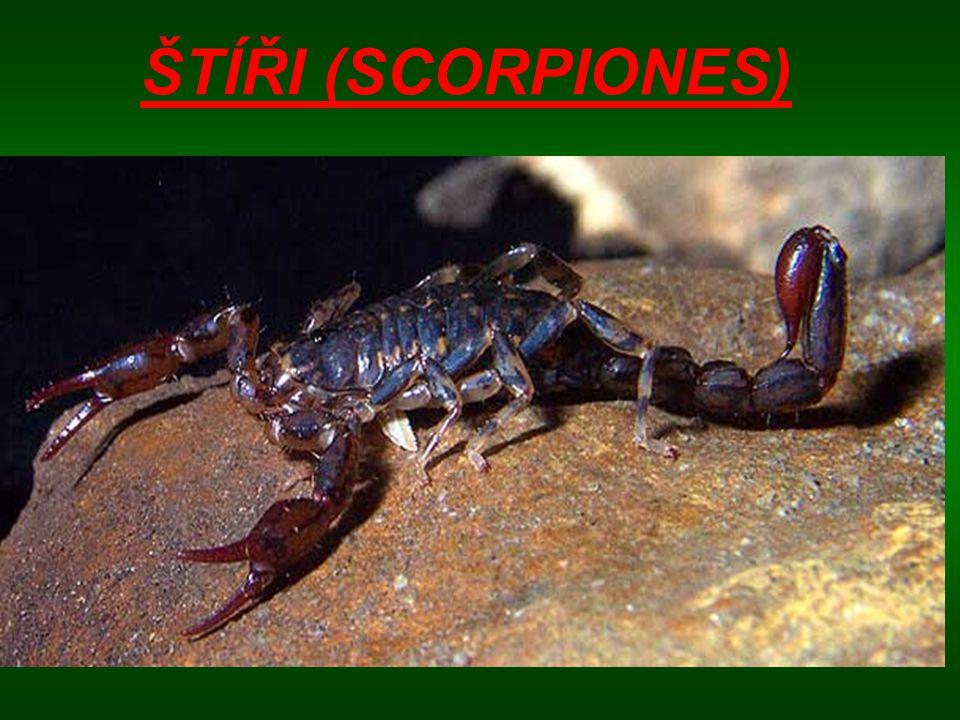 Existuje asi 1200 známých druhů štírů žijících v tropech a jiných teplých oblastech.