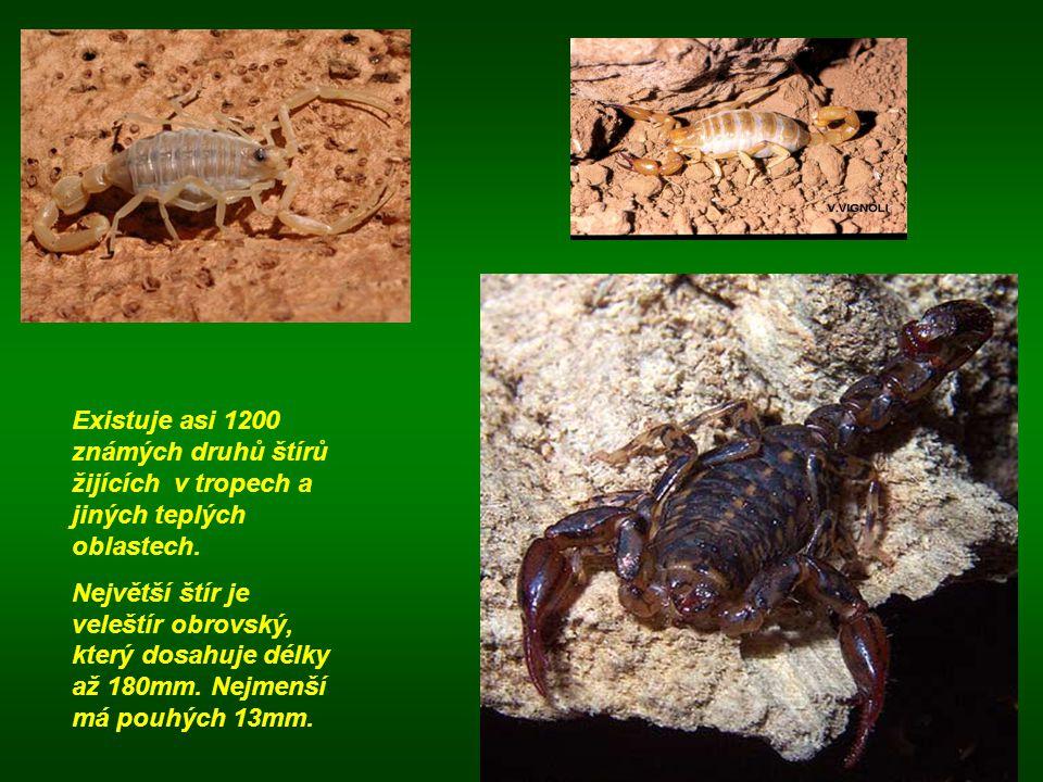 Existuje asi 1200 známých druhů štírů žijících v tropech a jiných teplých oblastech. Největší štír je veleštír obrovský, který dosahuje délky až 180mm