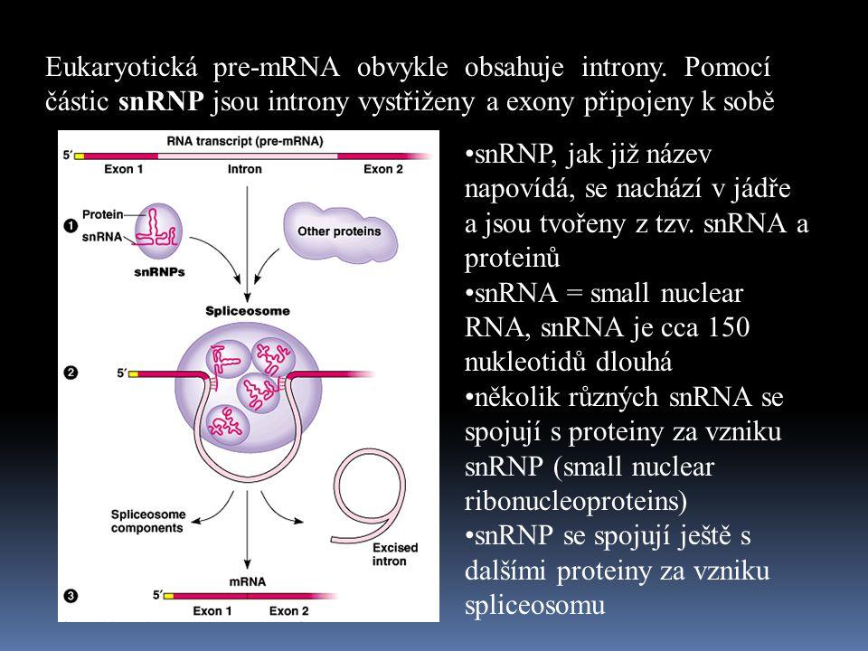 Eukaryotická pre-mRNA obvykle obsahuje introny.