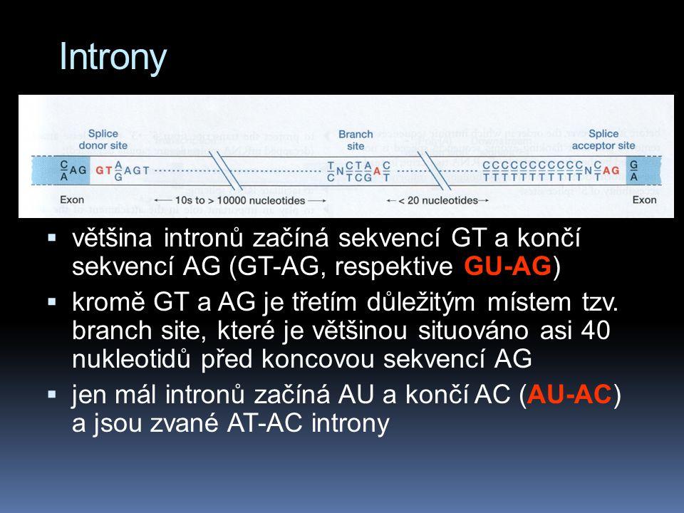 Introny  většina intronů začíná sekvencí GT a končí sekvencí AG (GT-AG, respektive GU-AG)  kromě GT a AG je třetím důležitým místem tzv.