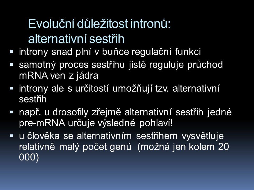 Evoluční důležitost intronů: alternativní sestřih  introny snad plní v buňce regulační funkci  samotný proces sestřihu jistě reguluje průchod mRNA ven z jádra  introny ale s určitostí umožňují tzv.