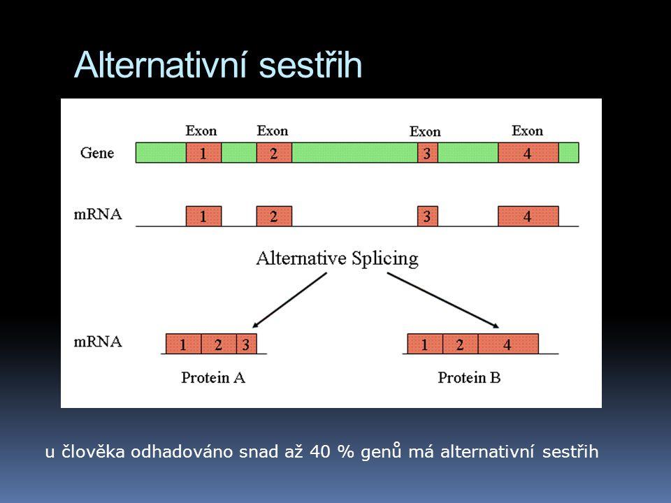 Alternativní sestřih u člověka odhadováno snad až 40 % genů má alternativní sestřih