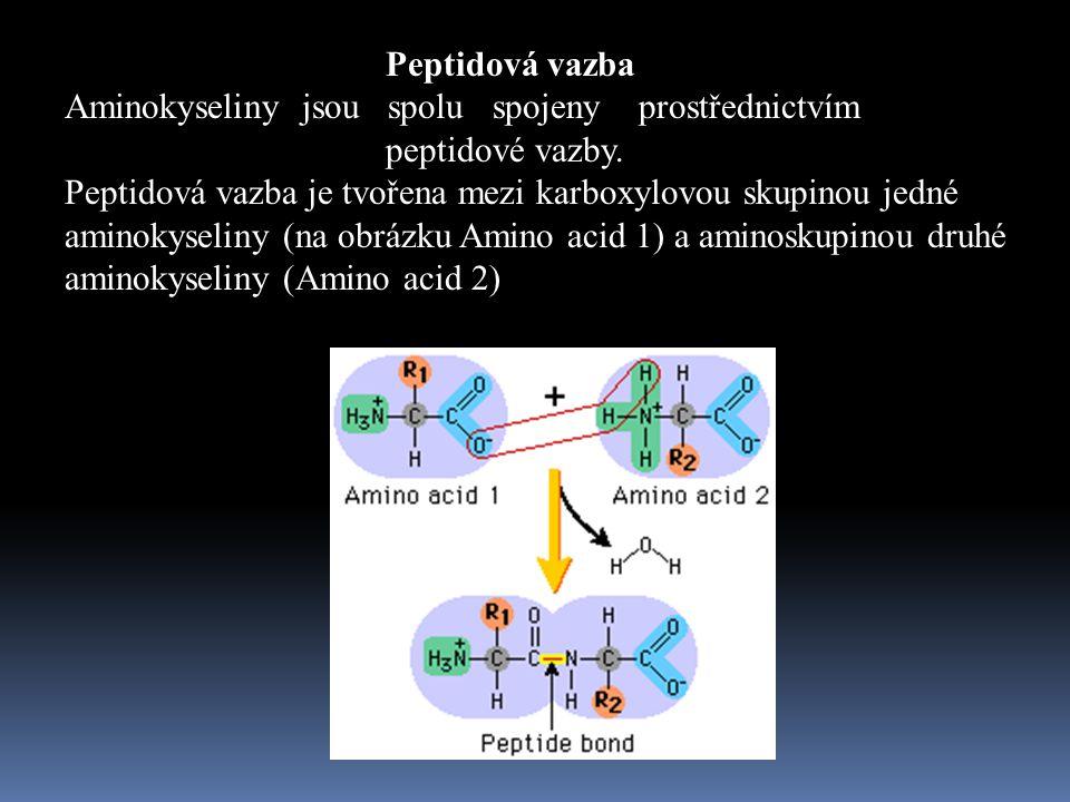 Peptidová vazba Aminokyseliny jsou spolu spojeny prostřednictvím peptidové vazby.