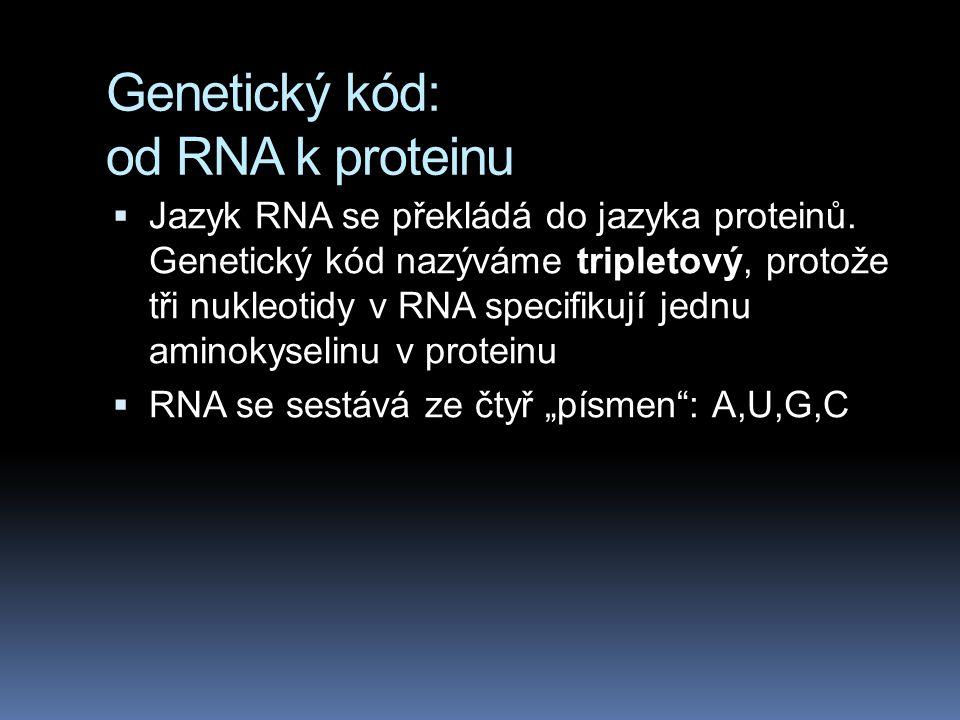 Genetický kód: od RNA k proteinu  Jazyk RNA se překládá do jazyka proteinů.