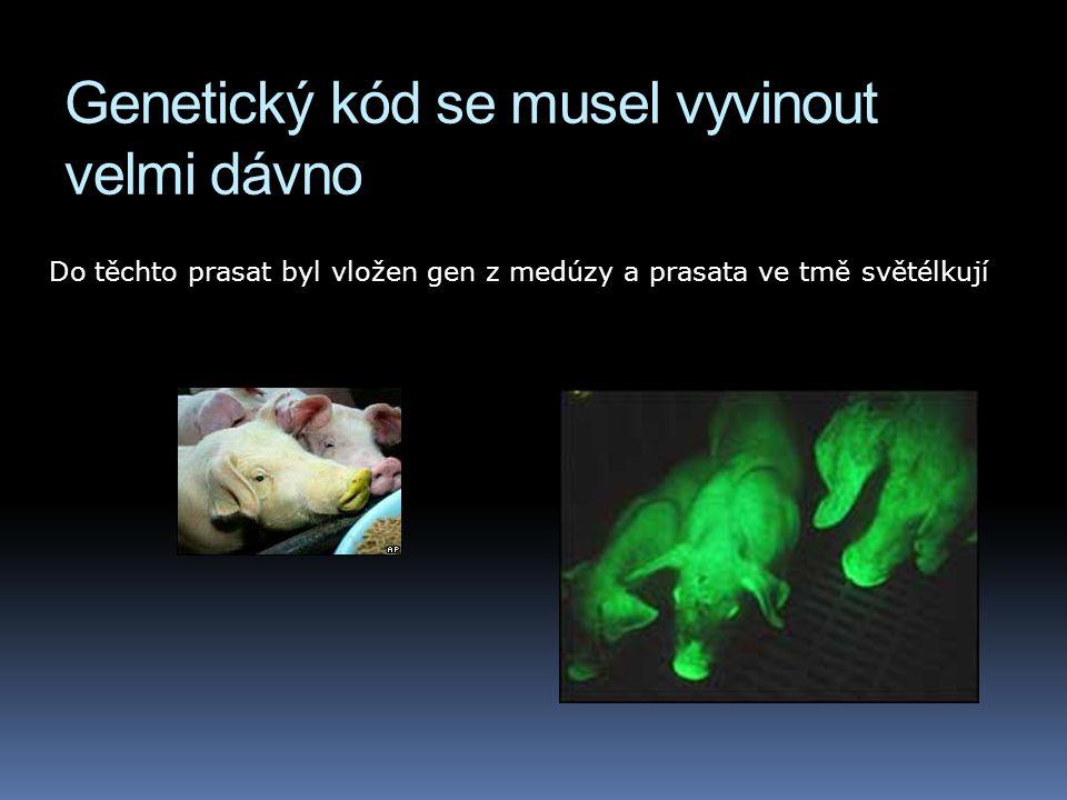 Genetický kód se musel vyvinout velmi dávno Do těchto prasat byl vložen gen z medúzy a prasata ve tmě světélkují