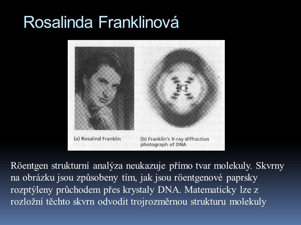 Rosalinda Franklinová Röentgen strukturní analýza neukazuje přímo tvar molekuly.